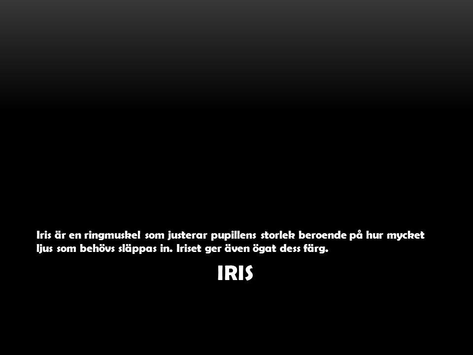 IRIS Iris är en ringmuskel som justerar pupillens storlek beroende på hur mycket ljus som behövs släppas in. Iriset ger även ögat dess färg.