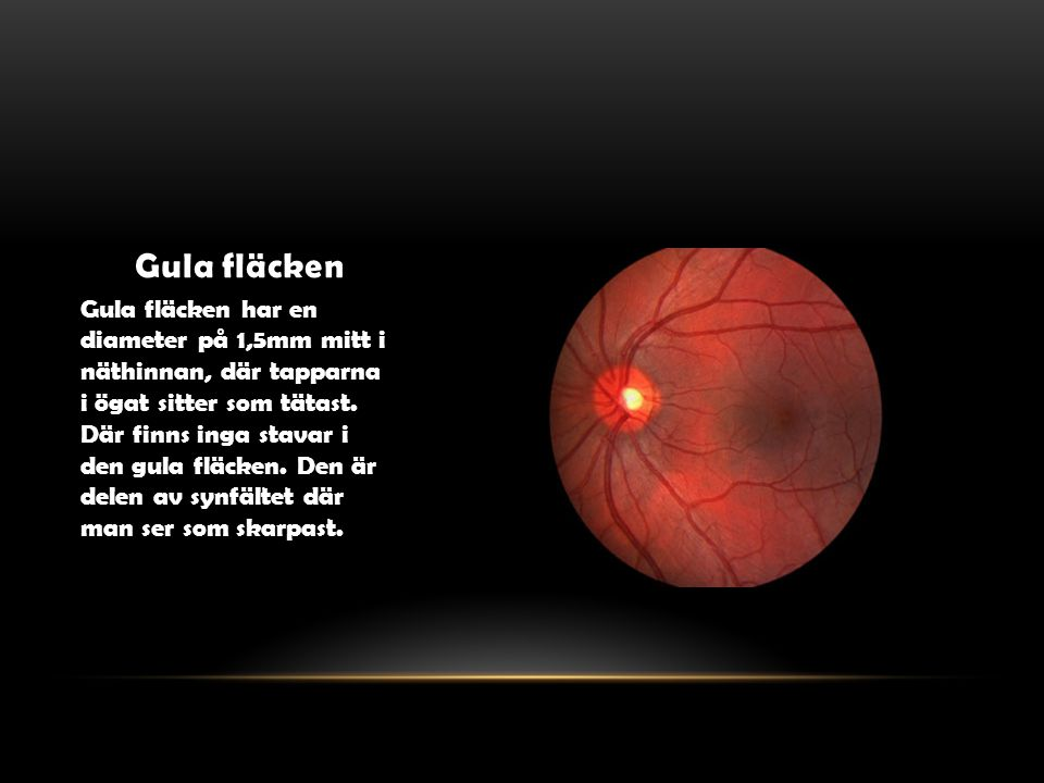 Gula fläcken Gula fläcken har en diameter på 1,5mm mitt i näthinnan, där tapparna i ögat sitter som tätast. Där finns inga stavar i den gula fläcken.
