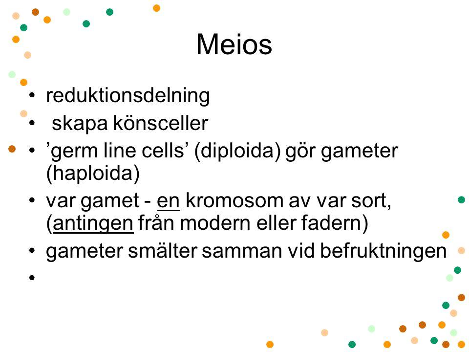 Meios reduktionsdelning skapa könsceller 'germ line cells' (diploida) gör gameter (haploida) var gamet - en kromosom av var sort, (antingen från modern eller fadern) gameter smälter samman vid befruktningen