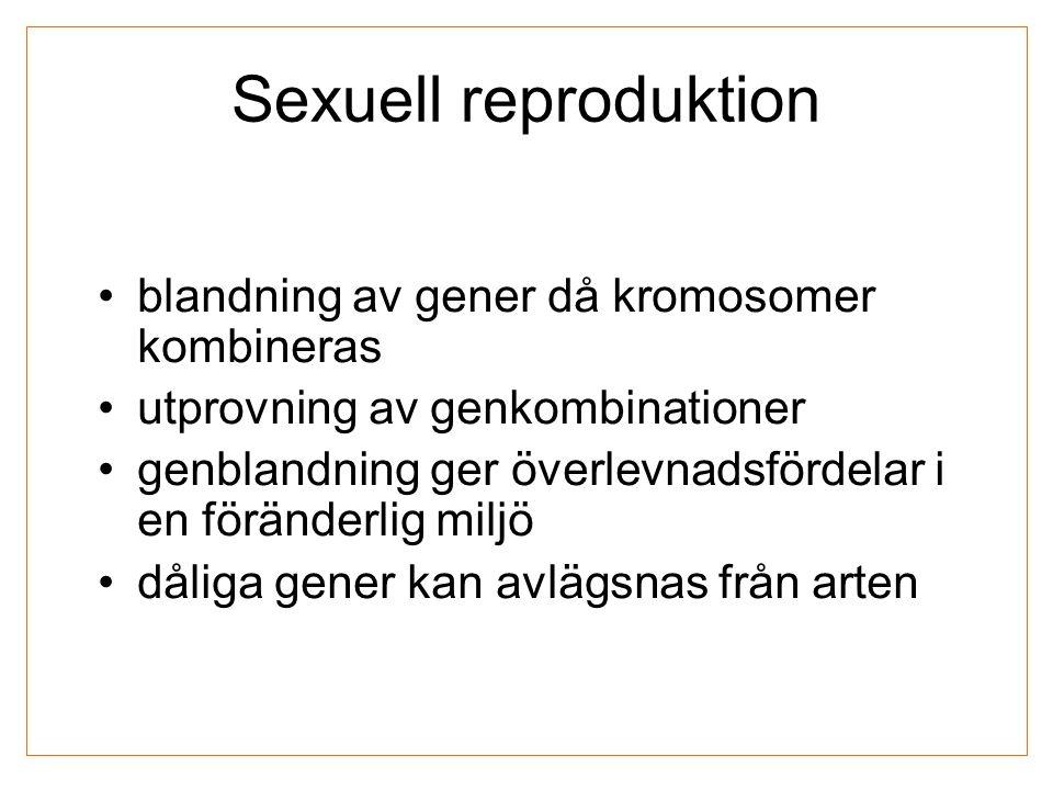Sexuell reproduktion blandning av gener då kromosomer kombineras utprovning av genkombinationer genblandning ger överlevnadsfördelar i en föränderlig miljö dåliga gener kan avlägsnas från arten