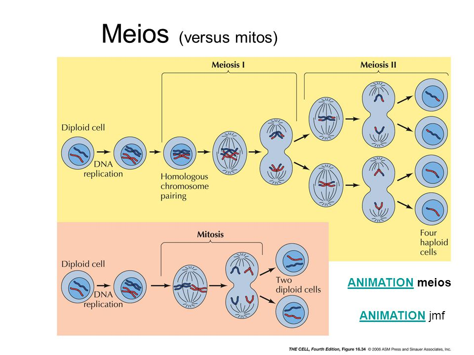 Meios (versus mitos) ANIMATIONANIMATION meios ANIMATIONANIMATION jmf