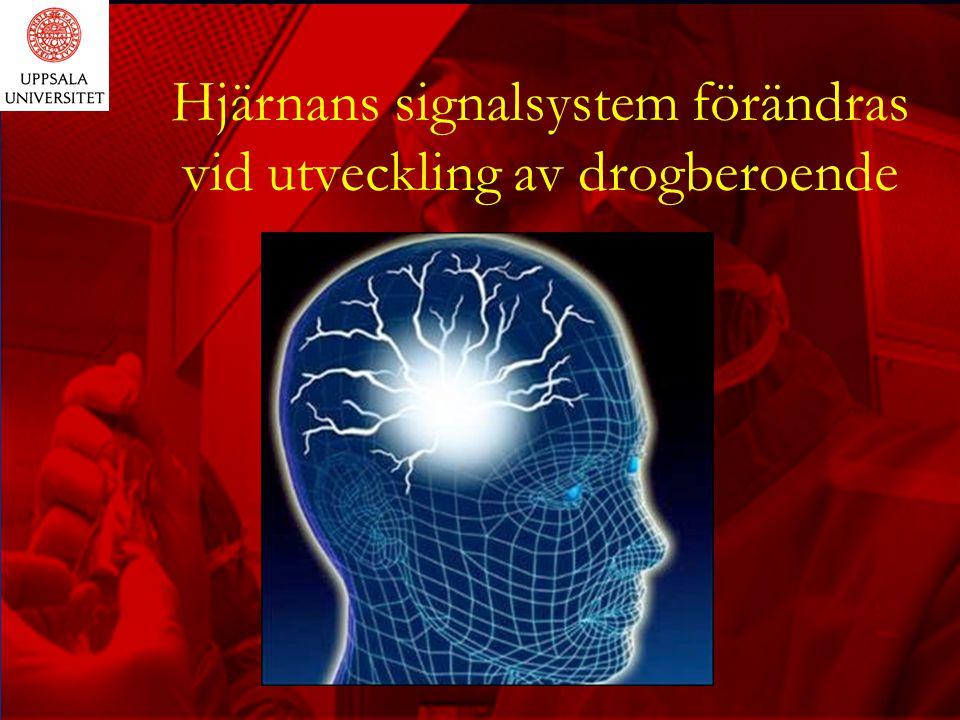 Hjärnans signalsystem förändras vid utveckling av drogberoende