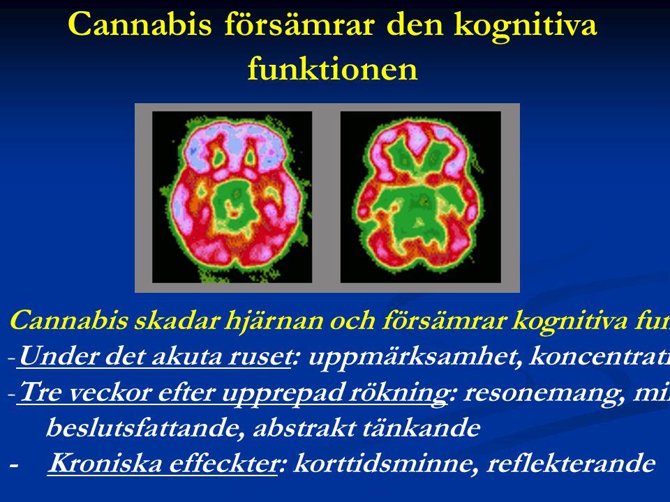 Cannabis försämrar den kognitiva funktionen Cannabis skadar hjärnan och försämrar kognitiva funktioner: -Under det akuta ruset: uppmärksamhet, koncent