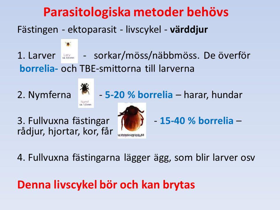 Parasitologiska metoder behövs Fästingen - ektoparasit - livscykel - värddjur 1. Larver - sorkar/möss/näbbmöss. De överför borrelia- och TBE-smittorna