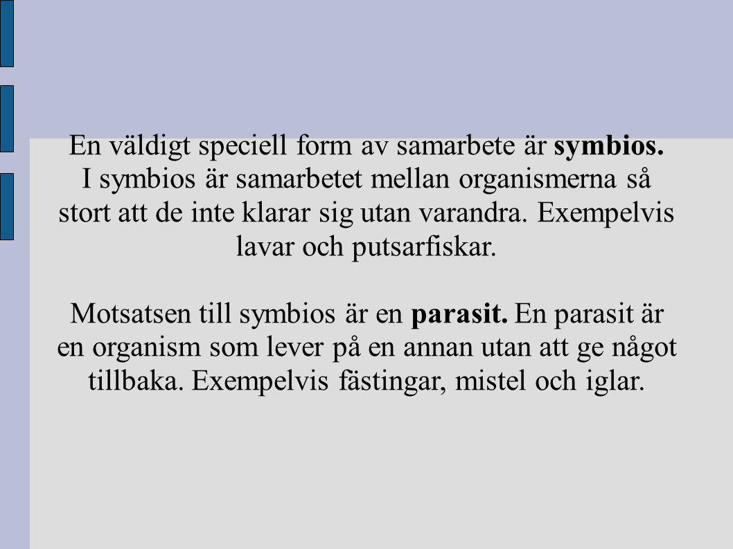 En väldigt speciell form av samarbete är symbios. I symbios är samarbetet mellan organismerna så stort att de inte klarar sig utan varandra. Exempelvi