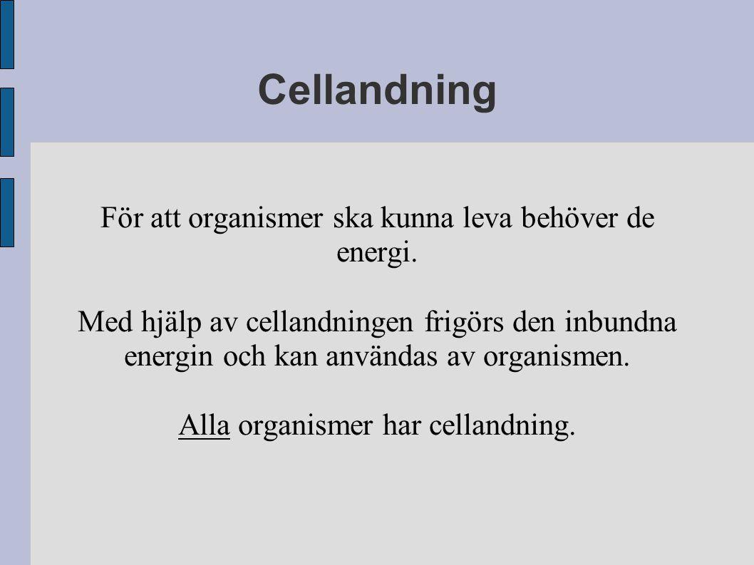 För att organismer ska kunna leva behöver de energi. Med hjälp av cellandningen frigörs den inbundna energin och kan användas av organismen. Alla orga