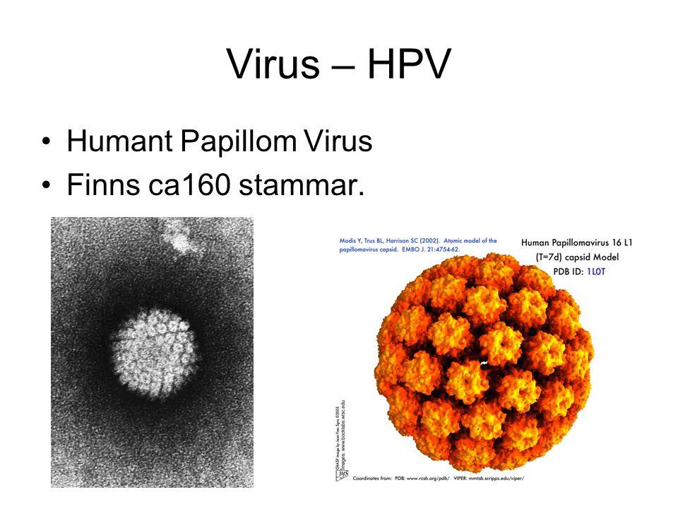 Virus – HPV Humant Papillom Virus Finns ca160 stammar.