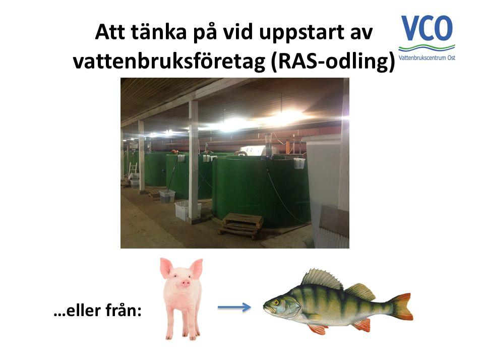 Att tänka på vid uppstart av vattenbruksföretag (RAS-odling) …eller från: