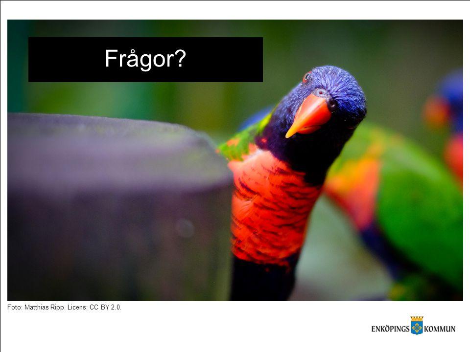 Frågor Foto: Matthias Ripp. Licens: CC BY 2.0.