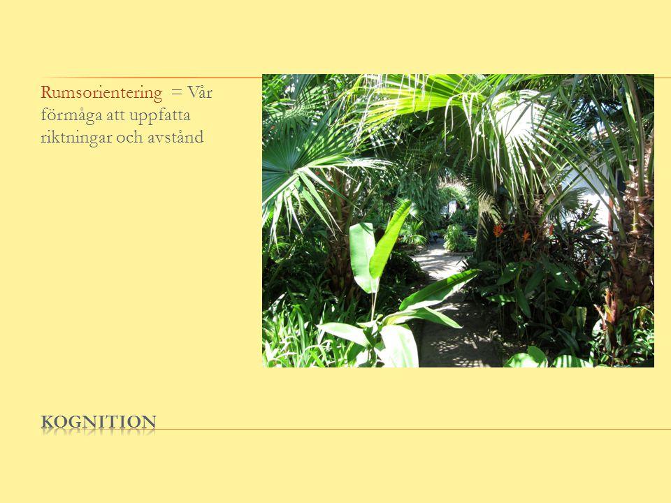 Rumsorientering = Vår förmåga att uppfatta riktningar och avstånd