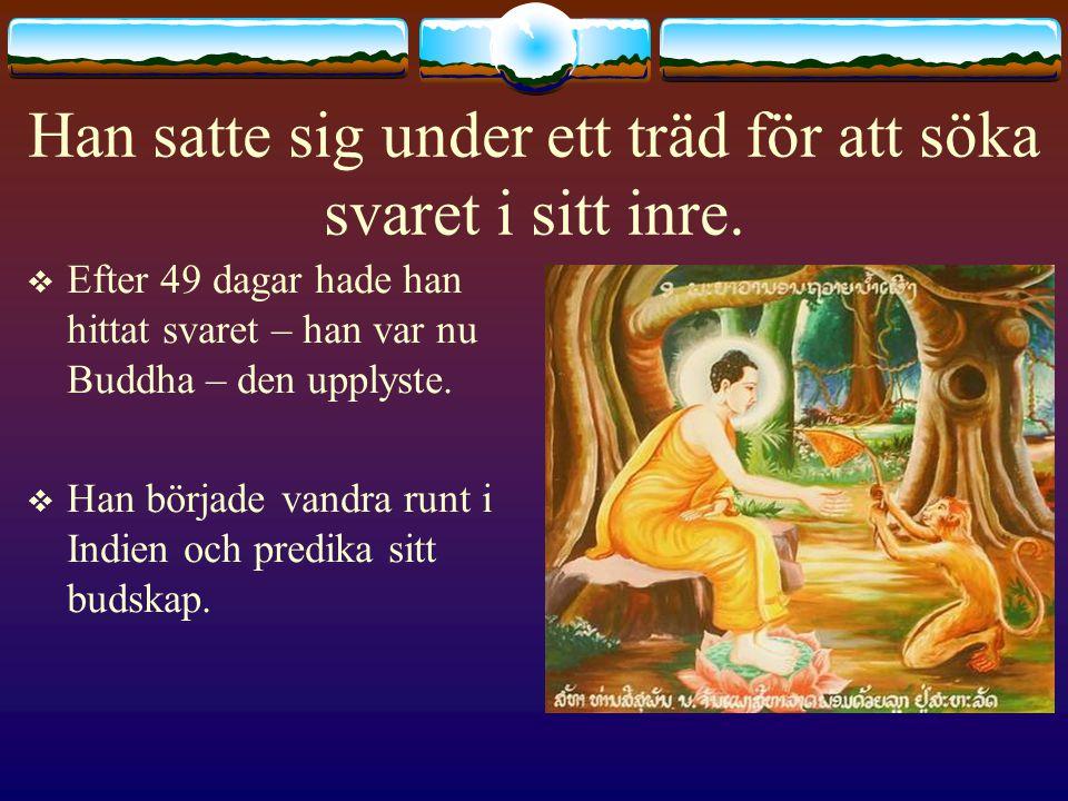 Han satte sig under ett träd för att söka svaret i sitt inre.  Efter 49 dagar hade han hittat svaret – han var nu Buddha – den upplyste.  Han börjad