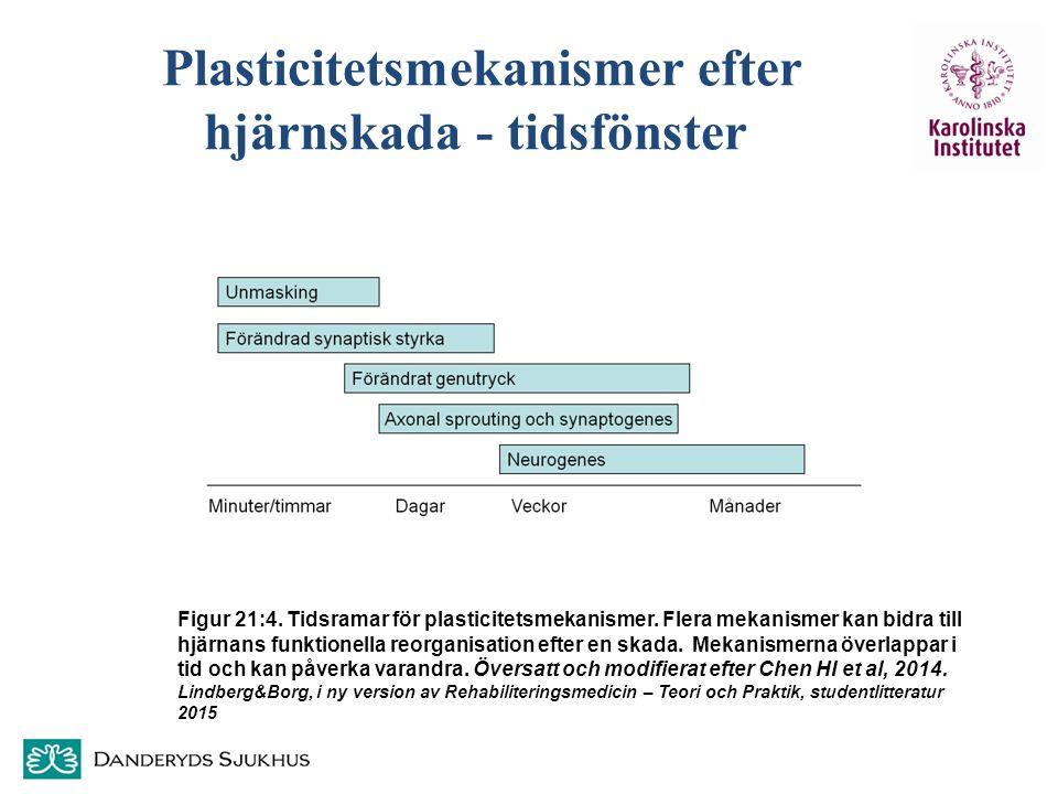 Plasticitetsmekanismer efter hjärnskada - tidsfönster Figur 21:4. Tidsramar för plasticitetsmekanismer. Flera mekanismer kan bidra till hjärnans funkt
