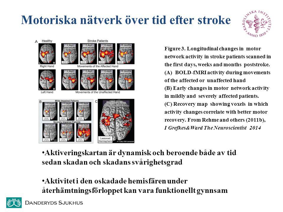Motoriska nätverk över tid efter stroke Figure 3. Longitudinal changes in motor network activity in stroke patients scanned in the first days, weeks a
