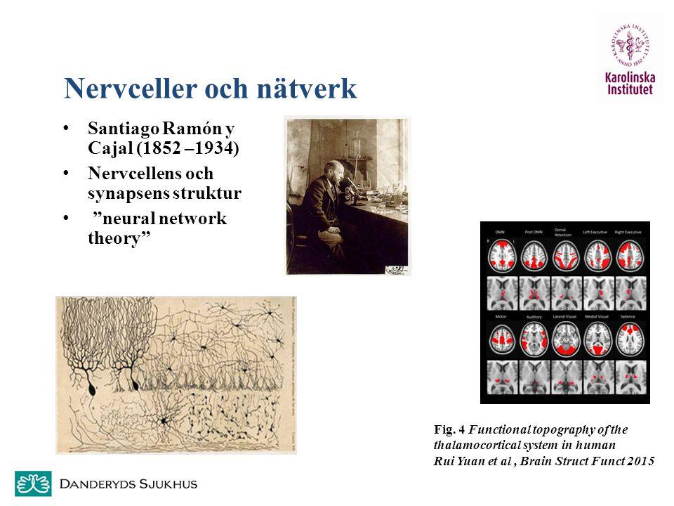 """Nervceller och nätverk Santiago Ramón y Cajal (1852 –1934) Nervcellens och synapsens struktur """"neural network theory"""" Fig. 4 Functional topography of"""