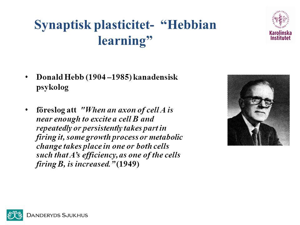 """Synaptisk plasticitet- """"Hebbian learning"""" Donald Hebb (1904 –1985) kanadensisk psykolog föreslog att"""