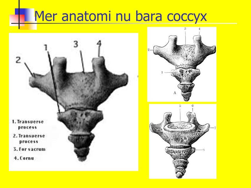 Mer anatomi nu bara coccyx