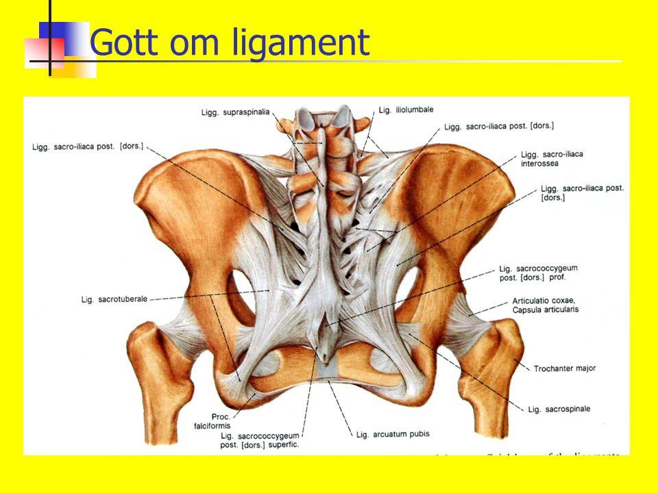 Gott om ligament