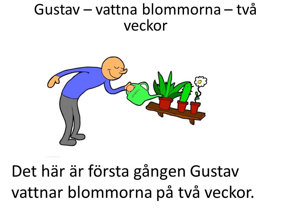 Det här är första gången Gustav vattnar blommorna på två veckor.