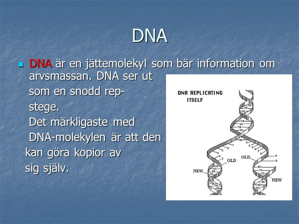 RNA För att föra information För att föra information från DNA-molekylen till från DNA-molekylen till ribosomen utanför cell- ribosomen utanför cell- kärnan finns ett ämne kärnan finns ett ämne som heter RNA.