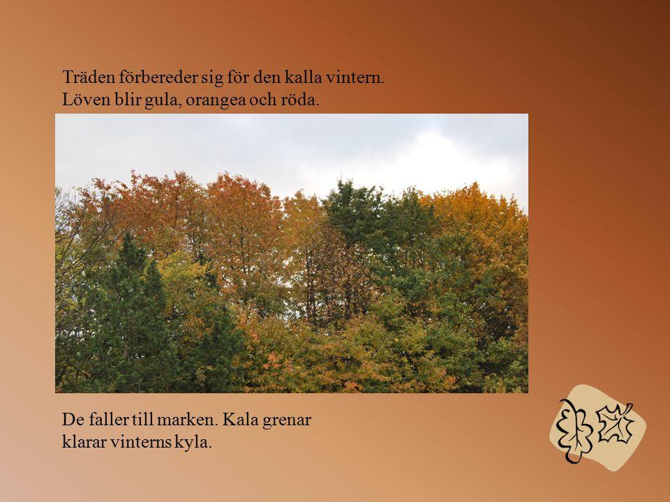 Hösten är den tredje årstiden på året. Till hösten tillhör september, oktober och november. Under hösten sker en hel del förändringar i våran natur. T