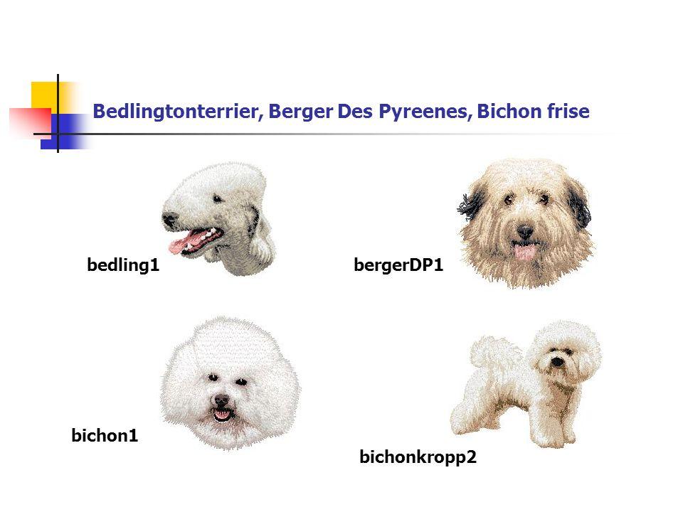 Bedlingtonterrier, Berger Des Pyreenes, Bichon frise bedling1bergerDP1 bichon1 bichonkropp2