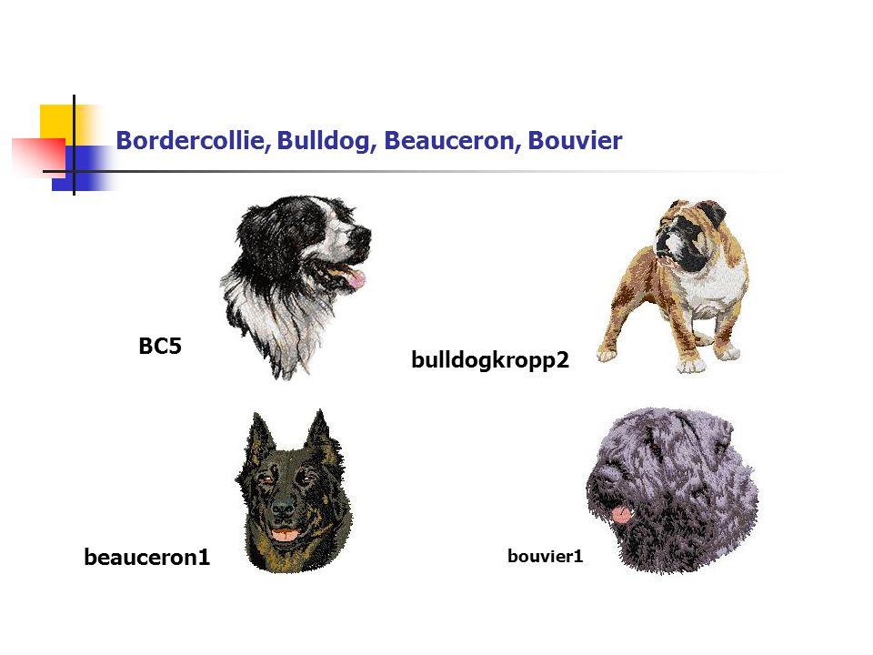 Bordercollie, Bulldog, Beauceron, Bouvier BC5 beauceron1 bulldogkropp2 bouvier1