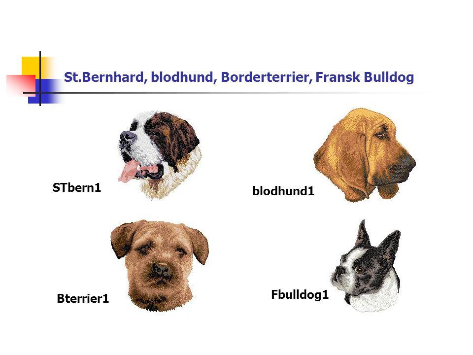 St.Bernhard, blodhund, Borderterrier, Fransk Bulldog STbern1 blodhund1 Bterrier1 Fbulldog1