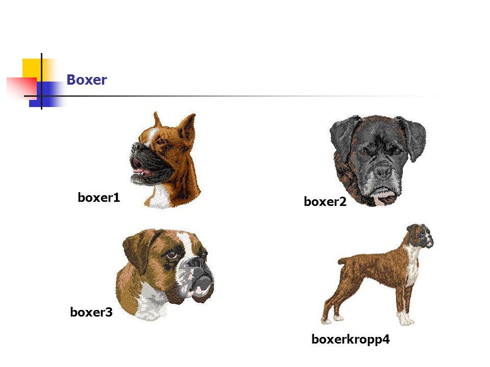 Boxer boxer1 boxer2 boxer3 boxerkropp4