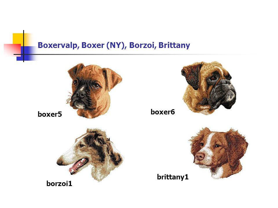 Boxervalp, Boxer (NY), Borzoi, Brittany boxer5 boxer6 borzoi1 brittany1