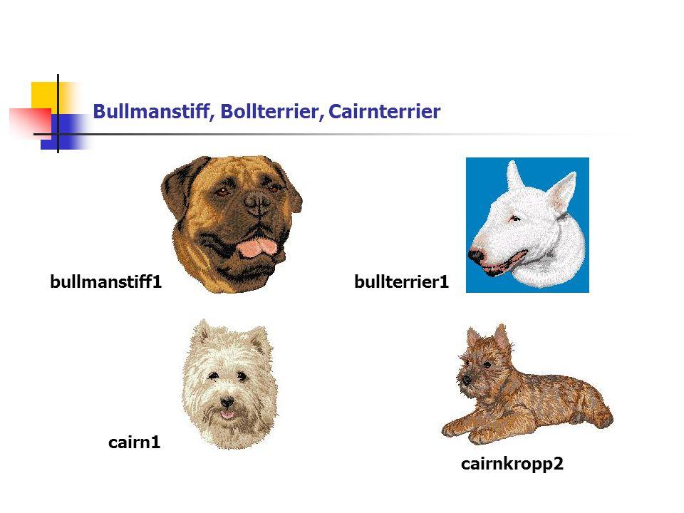 Bullmanstiff, Bollterrier, Cairnterrier bullmanstiff1bullterrier1 cairn1 cairnkropp2