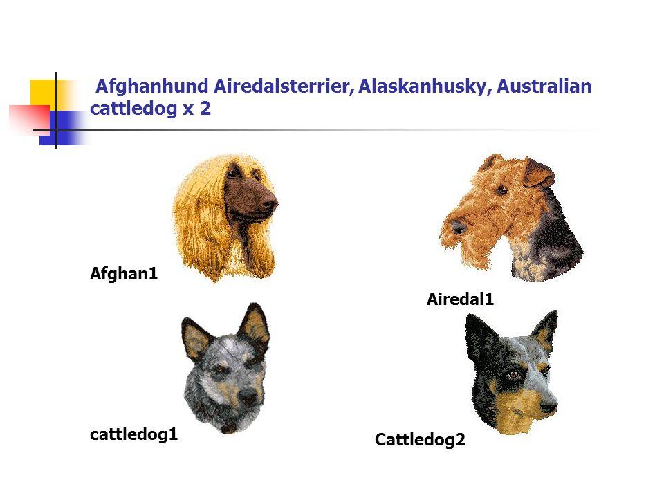 Afghanhund Airedalsterrier, Alaskanhusky, Australian cattledog x 2 Afghan1 Airedal1 cattledog1 Cattledog2