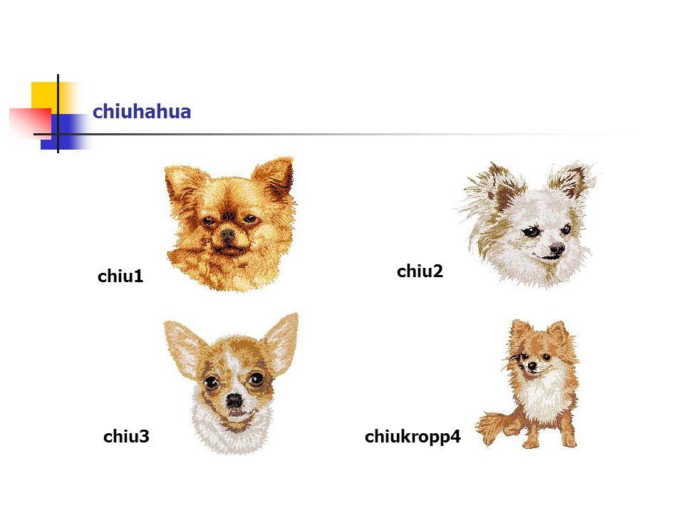 chiuhahua chiu1 chiu2 chiu3chiukropp4