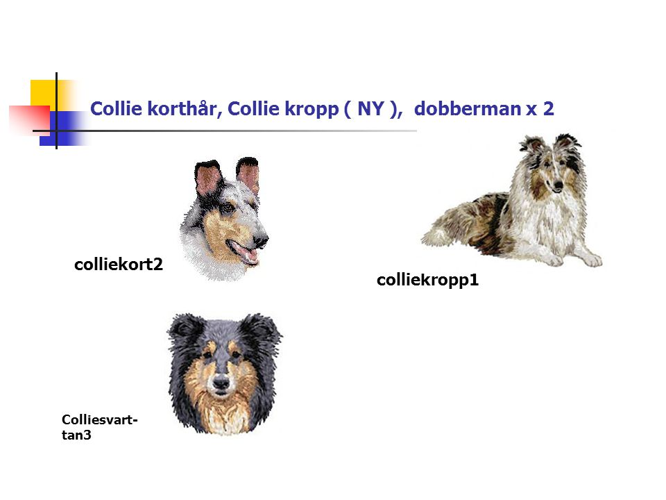 Collie korthår, Collie kropp ( NY ), dobberman x 2 colliekort2 colliekropp1 Colliesvart- tan3