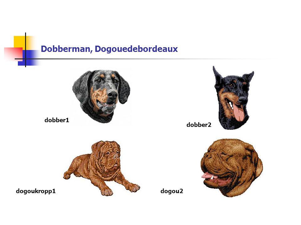 Dobberman, Dogouedebordeaux dogoukropp1 dobber1 dobber2 dogou2