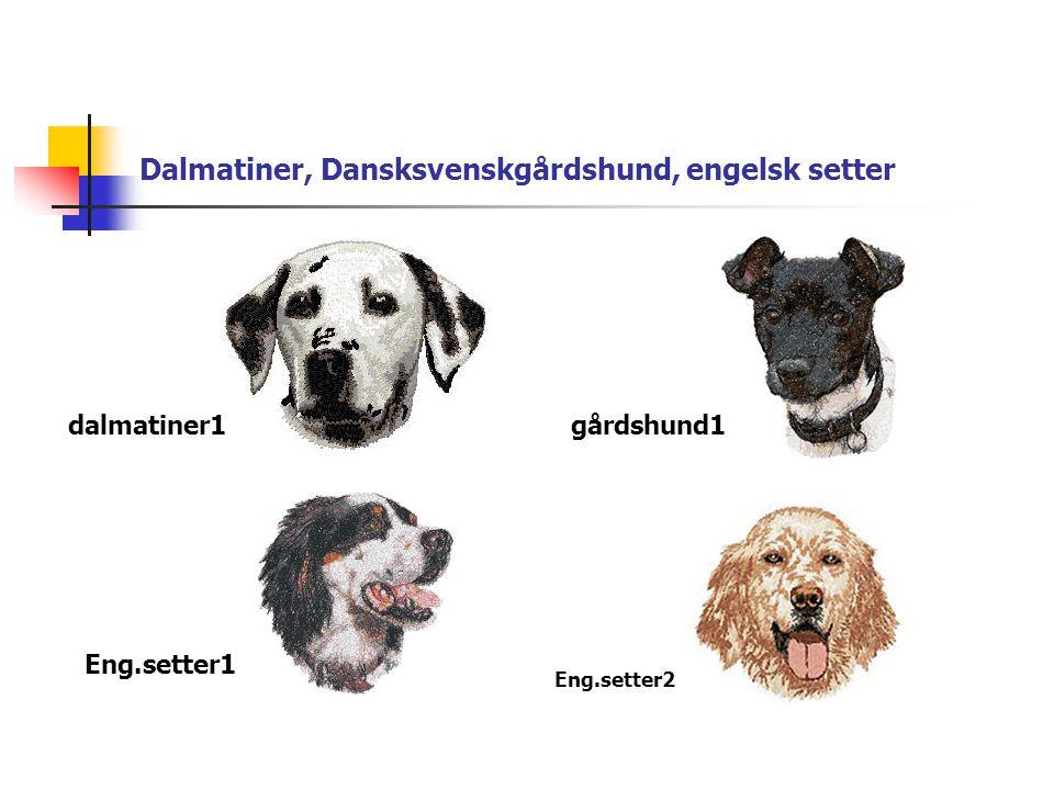Dalmatiner, Dansksvenskgårdshund, engelsk setter dalmatiner1gårdshund1 Eng.setter1 Eng.setter2