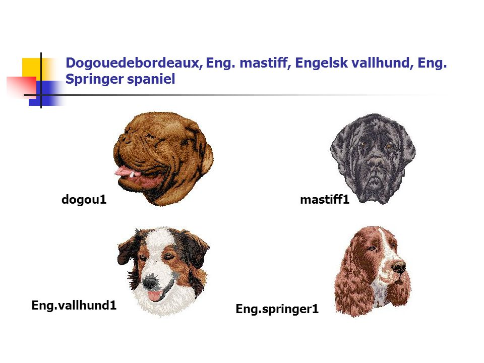 Dogouedebordeaux, Eng. mastiff, Engelsk vallhund, Eng. Springer spaniel dogou1mastiff1 Eng.vallhund1 Eng.springer1