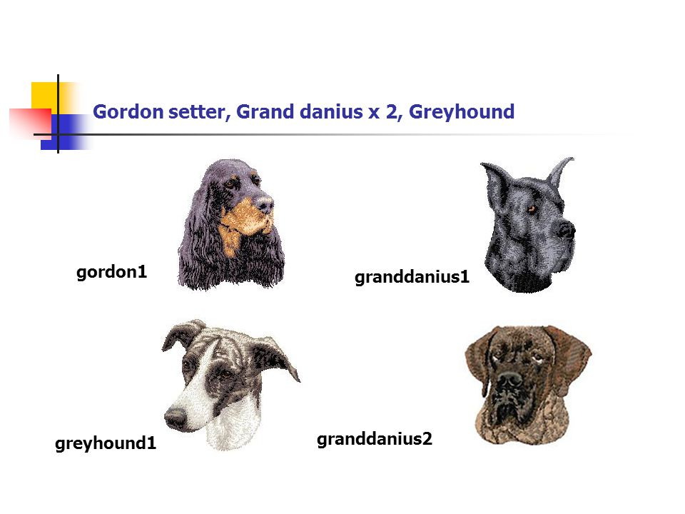 Gordon setter, Grand danius x 2, Greyhound gordon1 granddanius1 greyhound1 granddanius2