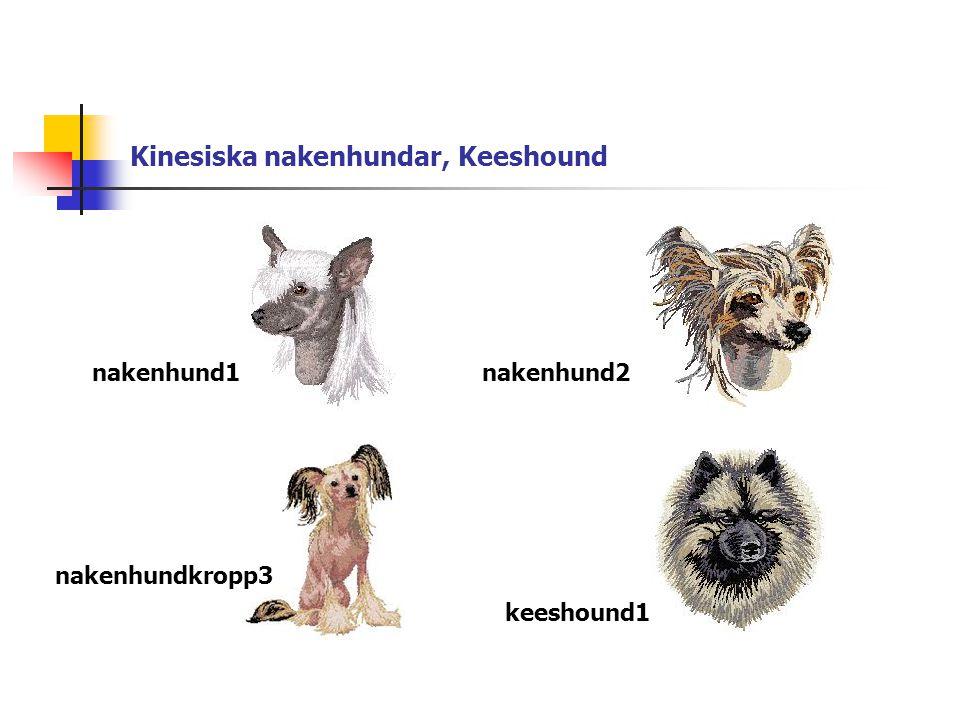 Kinesiska nakenhundar, Keeshound nakenhund1nakenhund2 nakenhundkropp3 keeshound1