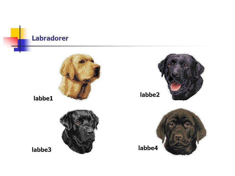 Labradorer labbe1 labbe2 labbe3 labbe4