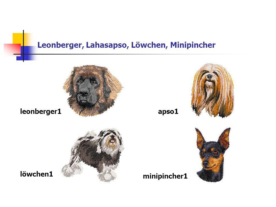 Leonberger, Lahasapso, Löwchen, Minipincher leonberger1apso1 löwchen1 minipincher1