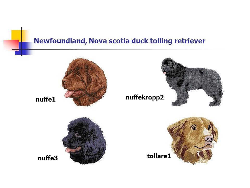 Newfoundland, Nova scotia duck tolling retriever nuffe1 nuffekropp2 nuffe3 tollare1