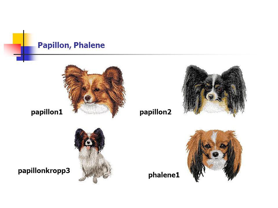 Papillon, Phalene papillon1papillon2 papillonkropp3 phalene1
