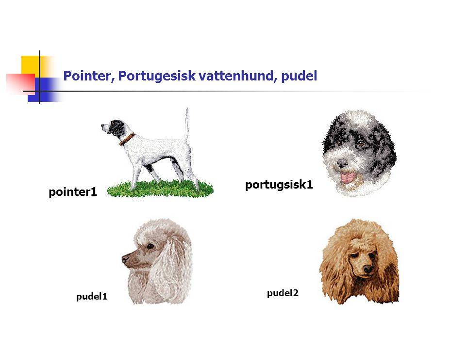 Pointer, Portugesisk vattenhund, pudel pointer1 portugsisk1 pudel1 pudel2