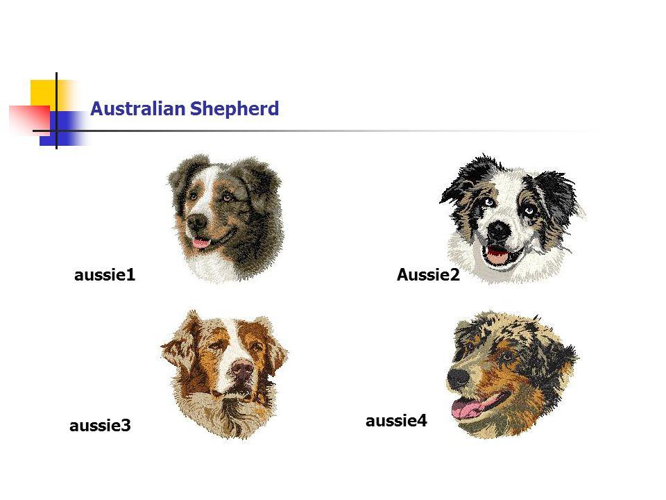Australian Shepherd aussie1Aussie2 aussie3 aussie4