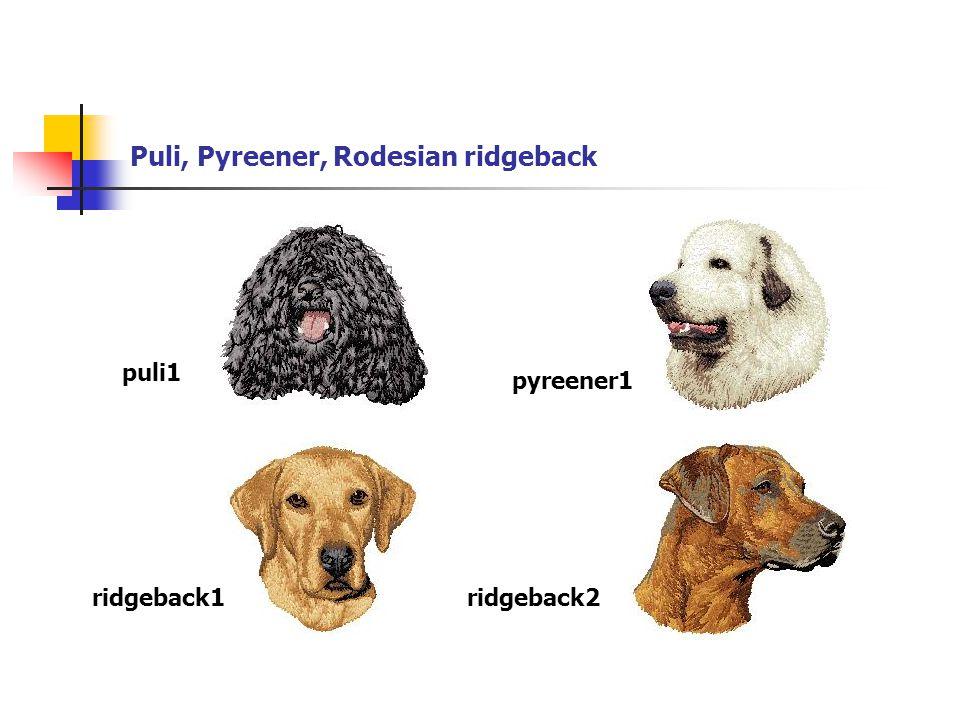 Puli, Pyreener, Rodesian ridgeback puli1 pyreener1 ridgeback1ridgeback2