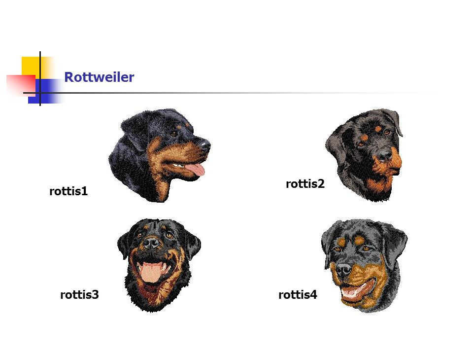 Rottweiler rottis1 rottis2 rottis3rottis4
