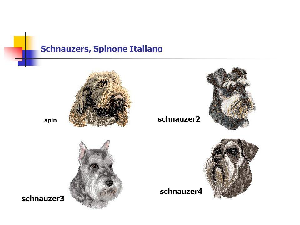 Schnauzers, Spinone Italiano schnauzer2 schnauzer3 schnauzer4 spin