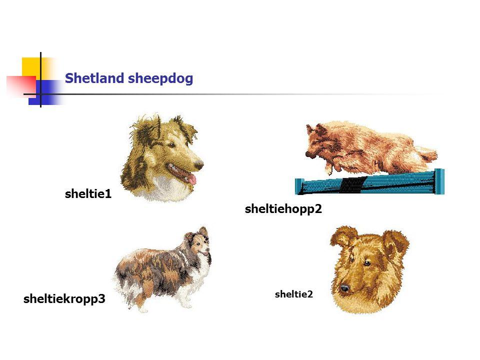Shetland sheepdog sheltie1 sheltiehopp2 sheltiekropp3 sheltie2