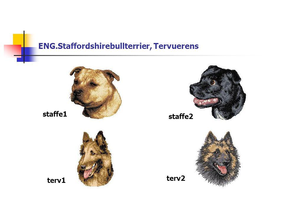 ENG.Staffordshirebullterrier, Tervuerens staffe1 staffe2 terv1 terv2