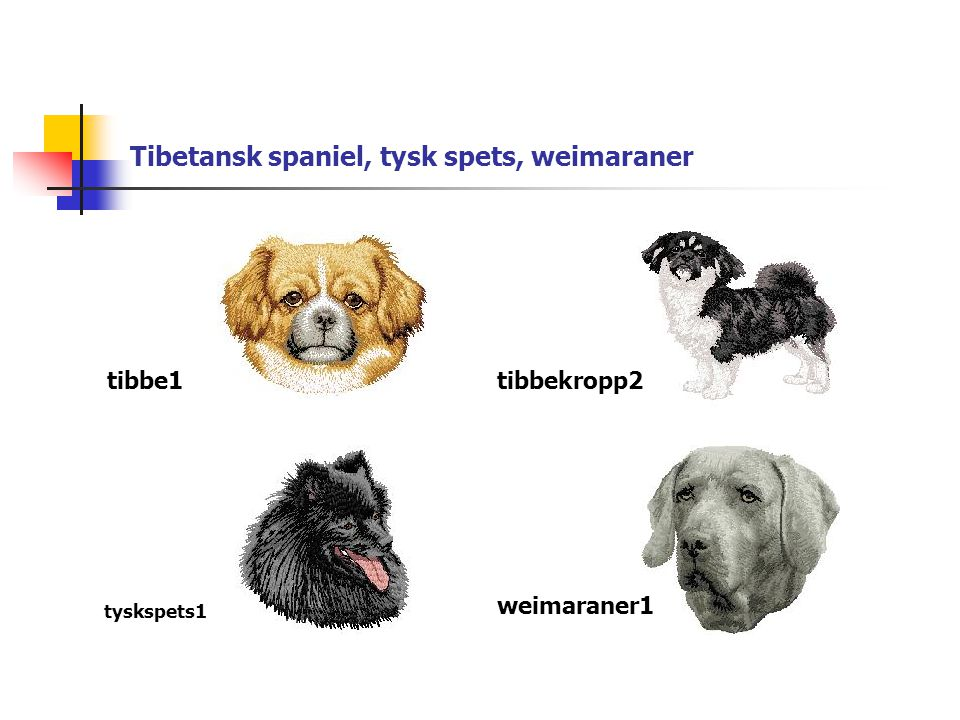 Tibetansk spaniel, tysk spets, weimaraner tibbe1tibbekropp2 weimaraner1 tyskspets1